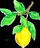 Limoentje-klein-249x300